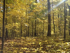 Fall Season in Green Bay, WI