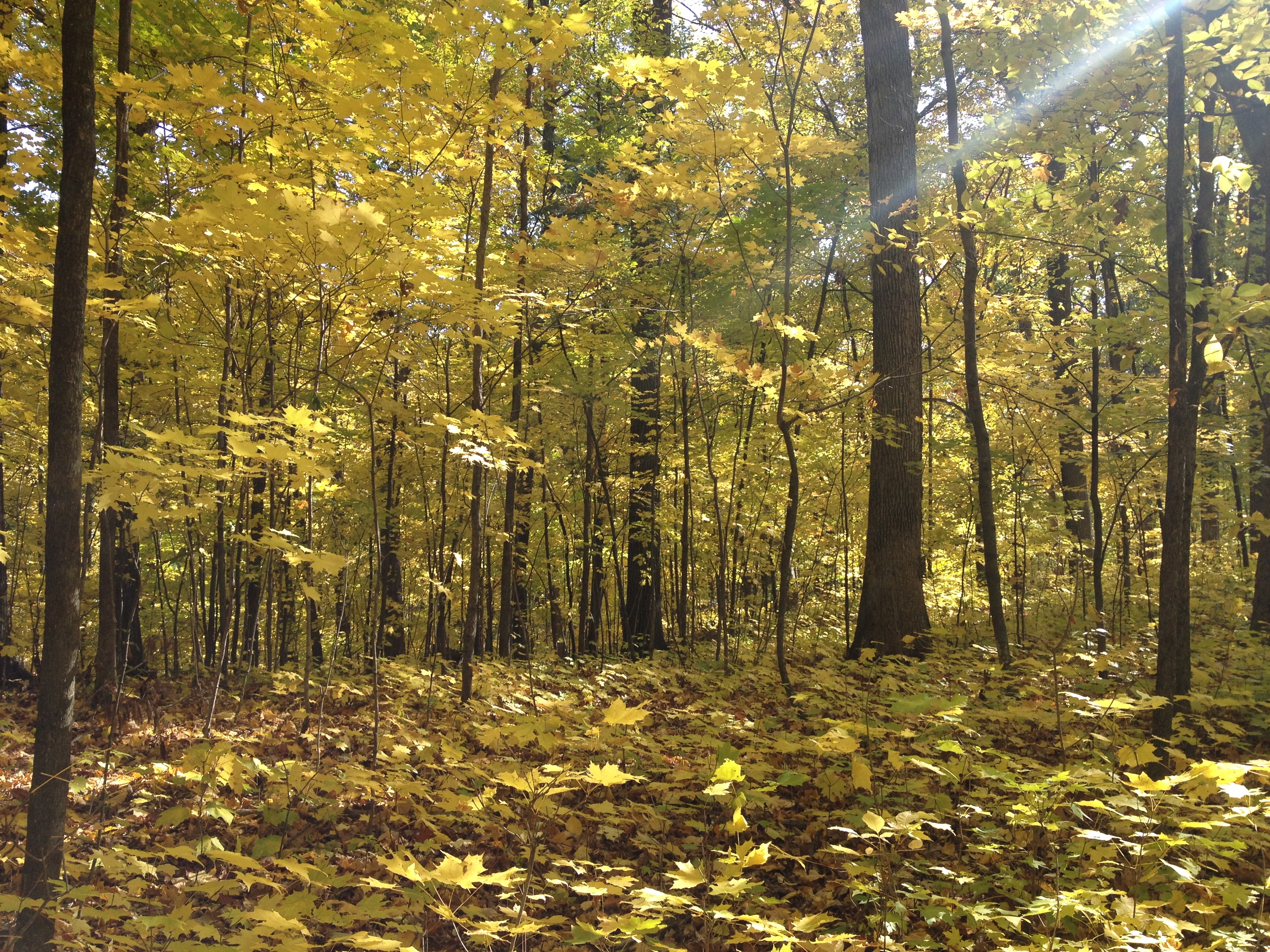 Fall Clean Up In Green Bay Wi